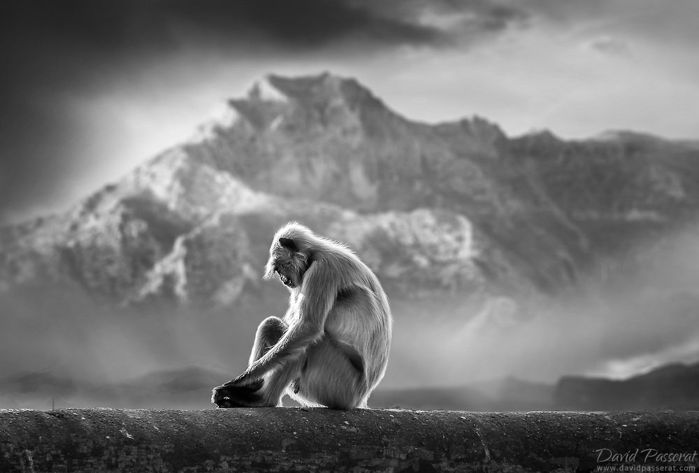 Monkey sitting in front of mountains.