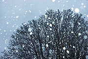 Snowfall over trees in Hampstead on 24th January 2021 in London, United Kingdom.