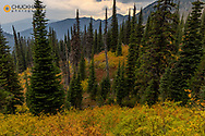 Autumn color in the Jewel Basin hiking Area of the Flathead National Forest, Montana, USA