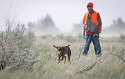 SHOT 5/9/20 8:55:27 AM - Various pointing breeds compete in the Vizsla Club of Colorado Licensed Hunt Test Premium at the Rocky Mountain Sporting Dog Club Grounds in Keenesburg, Co. (Photo by Marc Piscotty / © 2020)