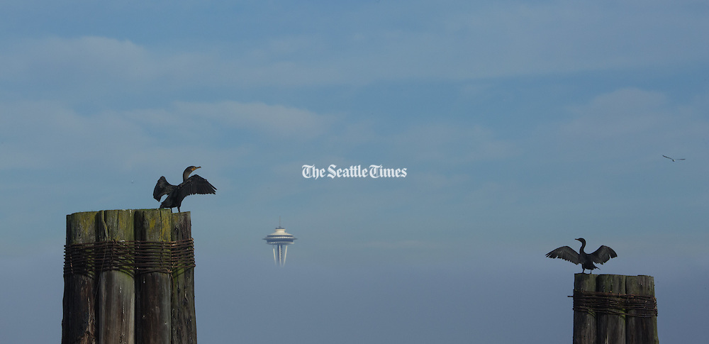 Cormorants dry their wings on pilings along the West Seattle waterfront as the top of the space needle peers through the fog at center. (Ellen M. Banner / The Seattle Times)