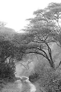 Black and white landscape with view of acacia trees and a dirt road in a rain, Lake Manyara National Park, Tanzania