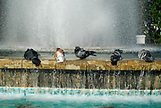 Pigeons bathing in fountain. Opatija, Croatia