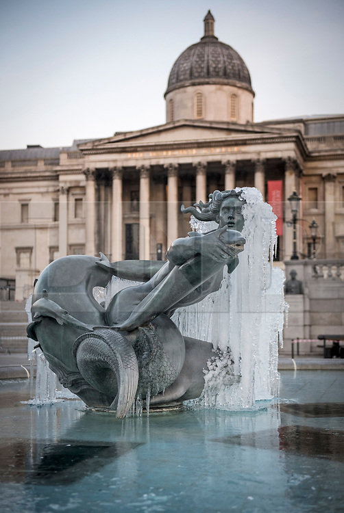 © Licensed to London News Pictures. 13/02/2021. London, UK. The fountains at Trafalgar Square in central London remain frozen over following another night of sub zero temperatures in the capital. Photo credit: Ben Cawthra/LNP