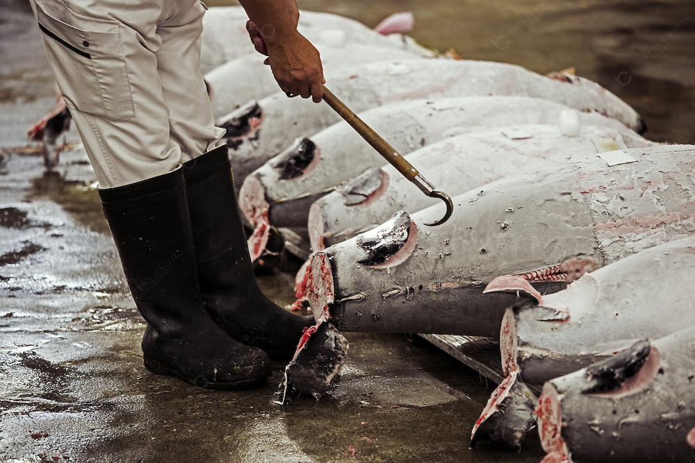 Man checking the quality of Tuna fishes at auction
