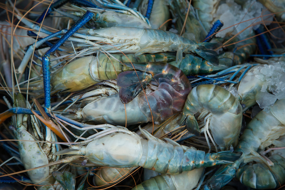 Asia, Myanmar, Yangon, large prawns (in shell)