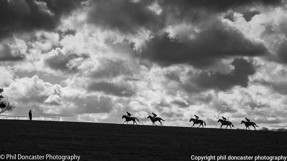 Racehorses meet trainer at the top of Warren hill gallops