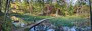 Enjoy walking a 2.3-mile loop (and other trails) around the old city reservoir which provided water 1917-1944 and now serves as lake habitat, in Bays Mountain Park & Planetarium, an attractive nature preserve in Kingsport, Tennessee, USA. Bays Mountain Park is the largest city-owned park in Tennessee and was declared a State Natural Area in 1973. As part of the Ridge-and-Valley Appalachians, the ridge of Bays Mountain runs southwest to northeast, from just south of Knoxville to Kingsport, in eastern Tennessee. This panorama was stitched from 4 overlapping photos.