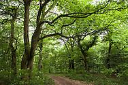 Europa, Deutschland, Nordrhein-Westfalen, Troisdorf, Wald in der Wahner Heide. - <br /> <br /> Europe, Germany, Troisdorf, North Rhine-Westphalia, wood in the Wahner Heath.