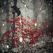 Small trees with vivid red leaves on a misty winter day - textured and manipulated photograph