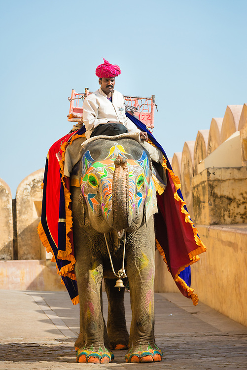 Elephant at Amber Fort, Jaipur