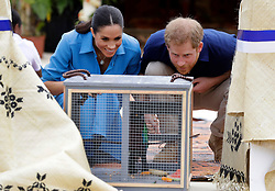 The Duke and Duchess of Sussex look at a parrot during a visit to dedicate a forest reserve to the Queen's Commonwealth Canopy, at Tupou College on the second day of the royal couple's visit to Tonga.