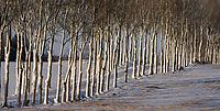 06.01.2017 Krynki woj podlaskie N/z osniezone drzewa przy drodze z Krynek do Jurowlan fot Michal Kosc / AGENCJA WSCHOD