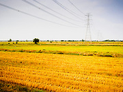 20 MARCH 2015 - CHACHOENGSAO, CHACHOENGSAO, THAILAND:  Electric lines running through the countryside in Prachninburi province Thailand. The State Railways of Thailand (SRT), established in 1890, operates 4,043 kilometers of meter gauge track that reaches most parts of Thailand. Much of the track and many of the trains are poorly maintained and trains frequently run late. Accidents and mishaps are also commonplace. Successive governments, including the current military government, have promised to upgrade rail services. The military government has signed contracts with China to upgrade rail lines and bring high speed rail to Thailand. Japan has also expressed an interest in working on the Thai train system. Third class train travel is very inexpensive. Many lines are free for Thai citizens and even lines that aren't free are only a few Baht. Many third class tickets are under the equivalent of a dollar. Third class cars are not air-conditioned.    PHOTO BY JACK KURTZ