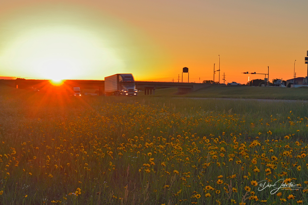 Wildflowers on the Interstate highway shoulder at sunrise, Mount Pleasant, Texas, USA