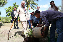 The Prince of Wales treads down some earth after helping to install a plant during a visit to the Finca Marta organic farm in the Caimito district, near Havana, Cuba, as part of an historic trip which celebrates cultural ties between the UK and the Communist state.