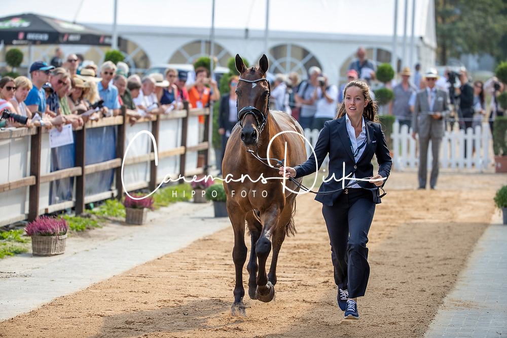 Hoogeveen Laura, NED, Wicro Quibus NOP<br /> European Championship Eventing<br /> Luhmuhlen 2019<br /> © Hippo Foto - Stefan Lafrentz