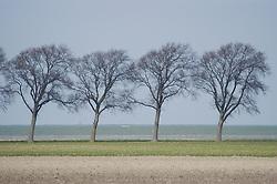 north Holland trees