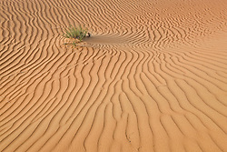 Desert sand in United Arab Emirates