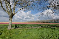 De Aardzee, Zeewolde, Flevoland, Netherlands