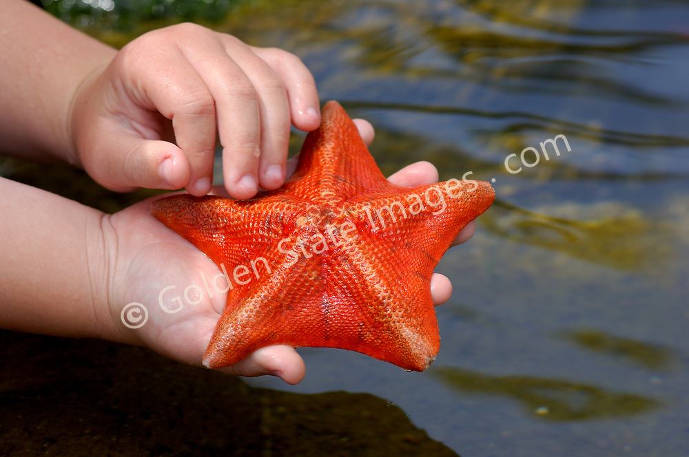 Child holding a bat star.