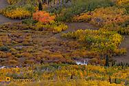 in Glacier National Park, Montana, USA