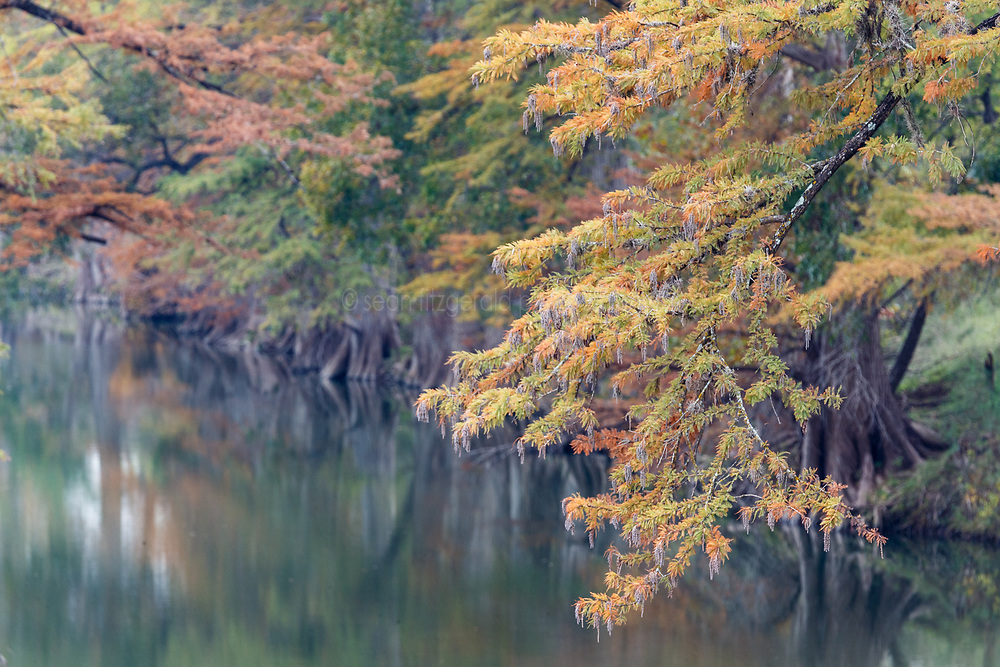 Trees in fall color on Guadalupe River near Comfort, Texas USA