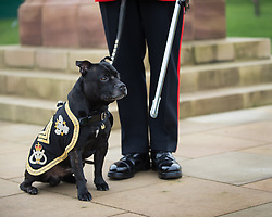 © Licensed to London News Pictures. 27/02/2016. <br /> <br /> Pictured: Regimental Mascot, of The Staffordshire Regiment, Sergeant Watchman The Fifth at the Operation Granby Service at The National Memorial Arboretum on Saturday 27th February 2016.<br /> <br /> A service has been held at The National Memorial Arboretum on Saturday 27th February 2016 to commemorate The Stafford Regiments participation in Operation Granby, a British military operation held in 1991 during the first Gulf War in which soldiers helped liberate Kuwait from Iraqi occupation ordered by Saddam Hussain.    <br /> <br /> Two Staffordshire Regiment soldiers, Private Carl Moult and Private Shaun Taylor were killed in Operation Granby.<br /> <br />  Photo credit should read Max Bryan/LNP