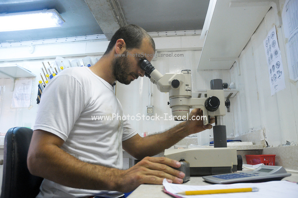 Israel, Coastal Plains, Kibbutz Maagan Michael Checking the fertility of the fish in a laboratory by inspecting the semen under a microscope Model Release available