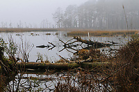 Blackwater National Wildlife Refuge, Cambridge, Maryland, USA
