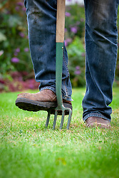 Lawncare - aerating with a fork