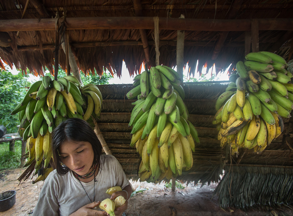 Albania (14) . Plantain are grown locally and fruit all year round, making them the all-season staple food of the Tsimane. The Nate family under the opened kitchen hut.