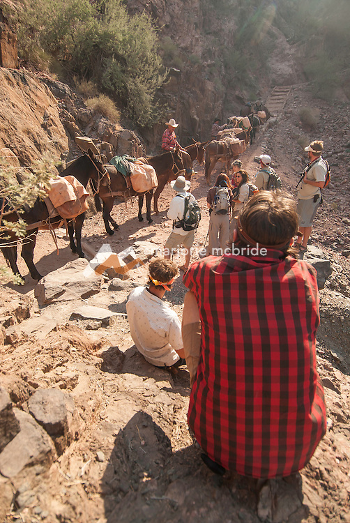 Mules and cowboys meet hikers near Phantom Ranch on the Colorado River in the Grand Canyon National Park, Arizona.