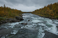 Flowing river through autumn forest landscape along Kungsleden Trail, Lapland, Sweden