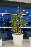 public space potted plant at Ataturk airport departure hall Istanbul Turkey