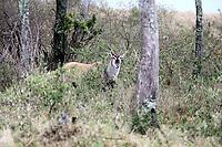 in the beautiful reserve of masai mara in kenya africa