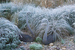 Bronze swans sculptures amongst grasses on a frosty morning.  Design: John Massey, Ashwood Nurseries