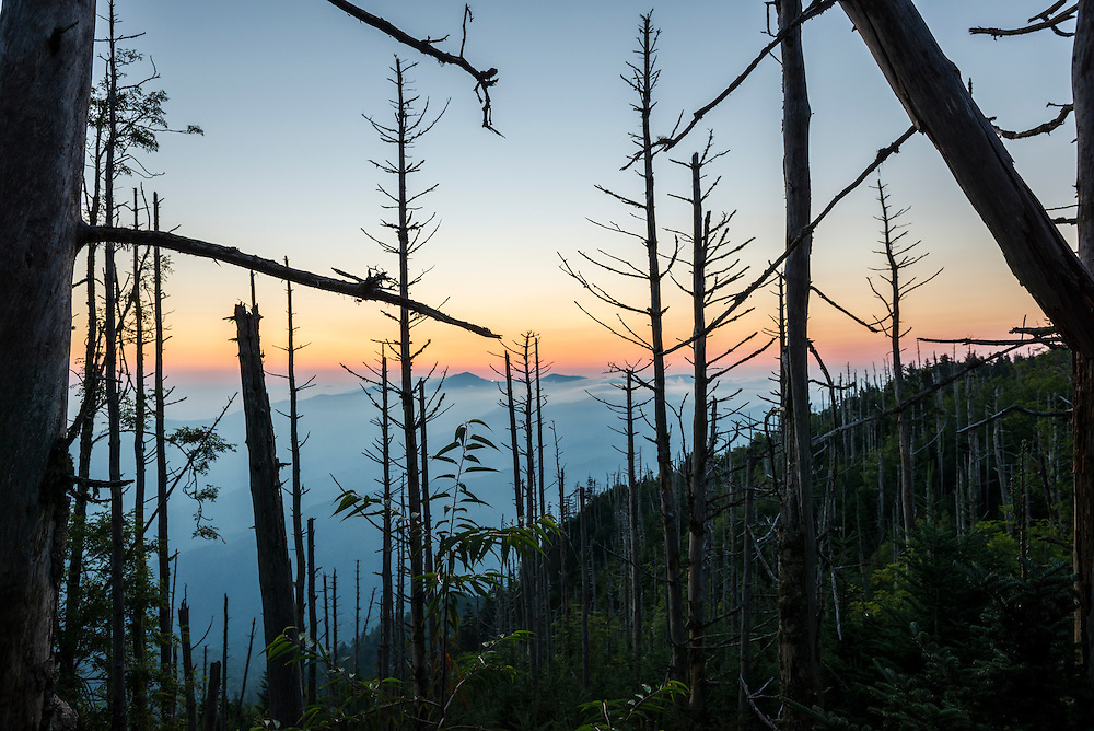 Appalachian Mountain landscape viewed from Mt. LeConte at sunrise in the Great Smoky Mountains National Park. The sun is just beginning to peak over the ridge in the center of the frame.<br /> (Great Smoky Mountains National Park, USA - August 2012)