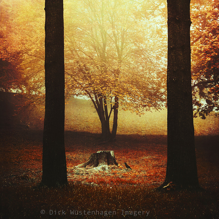 Morning light on tree stump and bird - manipulated Photograph