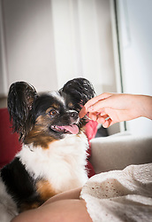 Woman stroking her dog in the living room, Munich, Bavaria, Germany