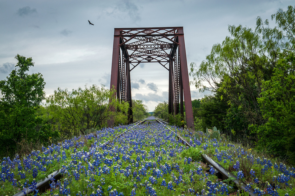 The light wasn't very good the day I headed to the Bluebonnet Tracks, but it was my last opportunity of the season. Through hours of on and off drizzle and clouded skies, the cloud cover finally shifted, and a lone bird flew across the frame. Hill Country, Texas
