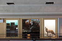 photograph ©2014 tom wagner. Photo documentation of Sunrise at Isle Royal, a collaboration of Tom Wagner and Paul Amenta, gallery installation at Artprize 2012 at the old Public Museum, (54 JEFF). copyright ©2014 tom wagner, all right reserved, all moral rights asserted ©tom wagner 2014