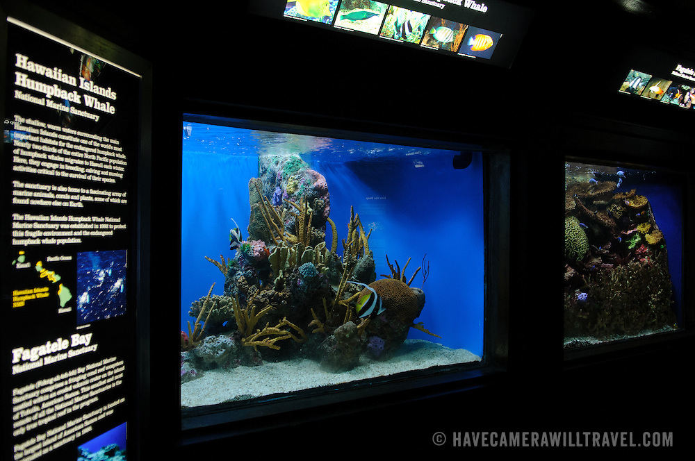 A tropical reef exhibit at the National Aquarium in Washington DC. The National Aquarium is in the basement of the Department of Commerce Building, where it has been housed since 1932. Much smaller and less well known than its affiliated facility in Baltimore, Washington's National Aquarium consists of a series of tanks illustrated various types of marine environments, with special emphasis on the many marine sanctuaries in U.S. marine territory.