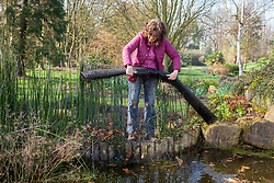 Removing pond netting in spring (which has been used to catch leaves over the winter)