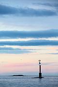 This picture I have named Threshold to the ocean. It brings back good memories from when I was young and out in a boat fishing late at night   Dette bildet har jeg kalt Terskelen til havet. Det gir meg gode minner fra jeg var liten og brukte å være ute i båt og fiska de sene sommerkvelder.