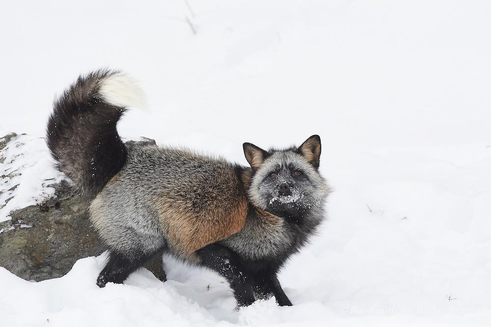 Owner, Elk Meadow Images