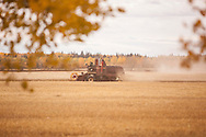 Photo Randy Vanderveen<br /> LaGlace, Alberta<br /> 2015-09-26 <br /> Gary Dixon uses a Massey Harris combine  to harvest  Canada Prairie Spring (CPS) wheat takes place on his and wife Shirley's land for the Bear Lake  Growing Project. The grain will be sold and money donated to the Canadian Food Grains Bank. This year the project had a number of groups and individuals from around the South Peace sponsor an acre to cover the input costs so all the money from the grain sold could be donated.