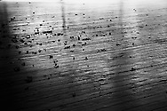 Dry leaves are scattered by the wind on an outdoor wooden plank floor (B&W). WATERMARKS WILL NOT APPEAR ON PRINTS OR LICENSED IMAGES.