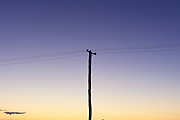 Power Pole and wires against a dusk sky, Australia