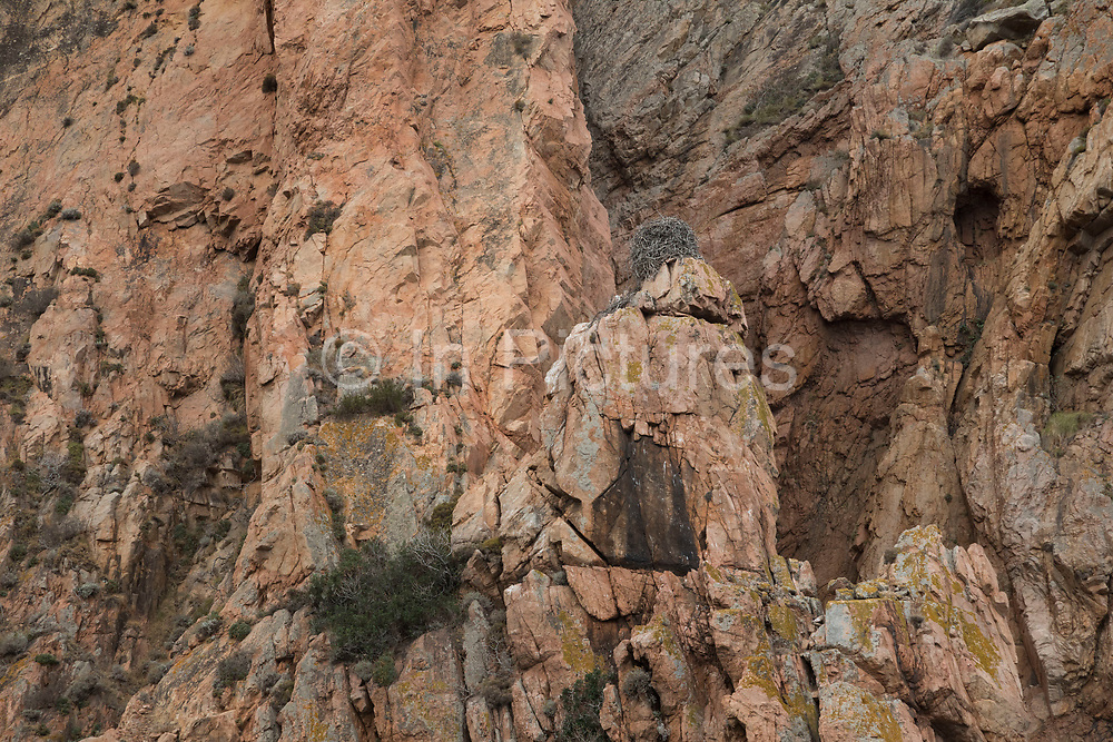 Osprey nest in the mountain landscape of the Calanques de Piana, gold and pink coloured granite rock formations formed by wind and rain erosion creating dramatic cavities as they descend into the sea at the gulf of Porto on 15th September 2017 in  Corsica, France. Corsica is an island in the Mediterranean and one of the 18 regions of France. It is located southeast of the French mainland and west of the Italian Peninsula.